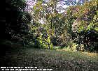 Singapore black & white bungalows for rent  - spacious garden