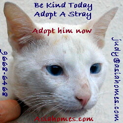 Sep 18 03. Stray cat, blue-eyed, 1 year old, male, neutered for adoption. 9668-6468.