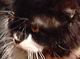 Cats Eyes Dilated Dying