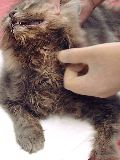 Young cat with profuse salivation and bad breath
