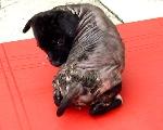 Kerosene kills pups as well as ticks.