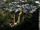 Nassim Road's fantastic greenery
