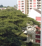 Braddell View has pool, tennis court, gym and is near Braddell subway