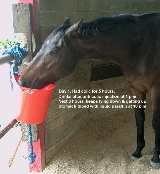 Singapore horse - impaction colic