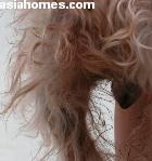 hyperestrogenism, nymphomania, female, Silkie Terrier