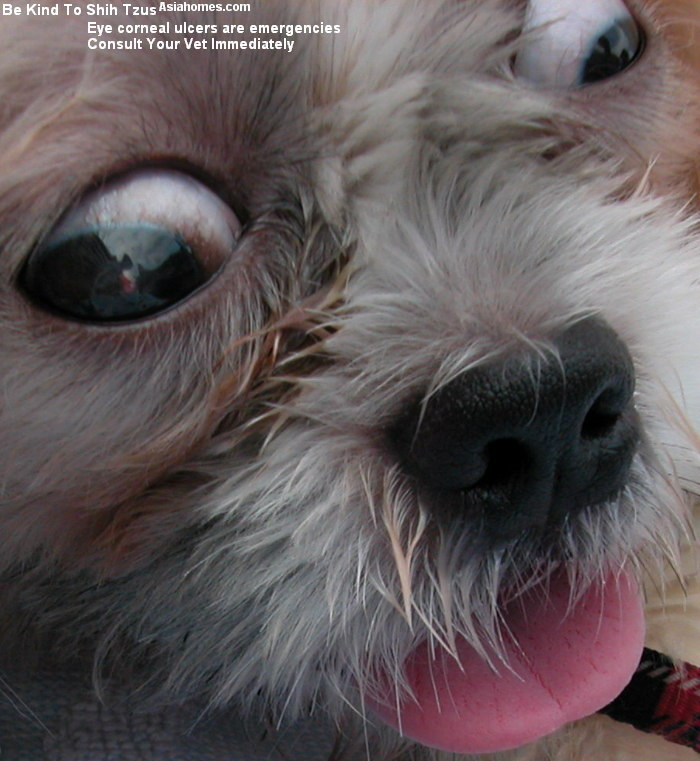 Eye Syndromes In Dogs