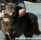 Singapore cross bred, industrial park dog