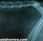 Male cat urolithiasis