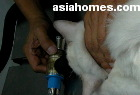 Gas anaesthesia of cat for castration, Singapore