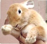 Rabbit: Overgrown front teeth