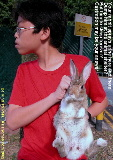 A young Singapore rabbit castrated. Sprayed urine in apartment.