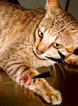 Cat flu and bite wounds commonly seen in stray cats